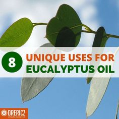 Eucalyptus essential oil uses are truly a gift from God. Find out how what the research shares about best medicinal & benefits of eucalyptus essential oil.