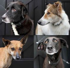 In three weeks, more than half of the original 25 dogs have been adopted.