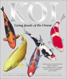 """""""Koi : living jewels of the Orient / A colorful, comprehensive source of information and advice on keeping, breeding, and showing these magnificent fish"""" edited by Steve Hickling"""