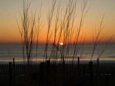 #Sunrise through dune grass~Rehoboth Beach, Delaware     -   http://vacationtravelogue.com Easily find the best price and availability   - http://wp.me/p291tj-7d