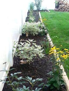 easy garden ideas along fence line Outdoor Life, Outdoor Gardens, Indoor Outdoor, Outdoor Ideas, Backyard Ideas, Garden Ideas Along Fence Line, Garden Paths, Garden Landscaping, Backyard Retreat