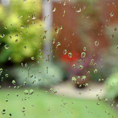 How to Create an Effective Rain Garden Perennial Flowering Plants, Perennials, Desert Environment, Water Pollution, California Poppy, Square Foot Gardening, Rain Garden, Science Projects, Native Plants