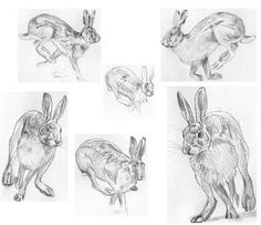 running-hares-sketches_540.jpg (540×466)