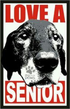 Love a senior dog