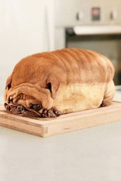 oh it's funny 'cause this dog looks like BREAD! seriously laughed!