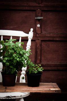 vegetable garden, photography, green diy garden, ninasbaking -