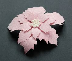 Picturing the World: SUS poinsetta