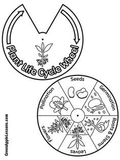 Course of the plant life cycle Plant life cycle craft Activity of … - Modern Plant Lessons, Science Lessons, Science For Kids, Science Activities, Science And Nature, Sequencing Activities, Science Experience, Life Cycle Craft, Plant Science