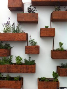 vertical herb garden on white wall.