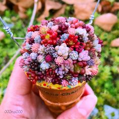 Stuffed from lunch, but I can always have a succulent ice cream. Succulent Arrangements, Cacti And Succulents, Planting Succulents, Cactus Plants, Planting Flowers, Succulent Gardening, Succulent Terrarium, Container Gardening, Decoration Plante