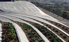 Novo protótipo de telhado verde é desenvolvido em Los Angeles