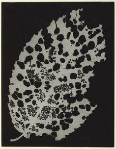 Man Ray (Emmanuel Radnitzky)  American, 1890-1976, Dead Leaf