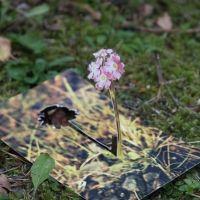 Autumn Primrose, 2010 (postcard sculpture; photo)