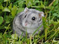1000+ images about UNSER NEUER HAMSTER MIT ZUBEHÖR on Pinterest | Hamsters, Dwarf hamsters and Babies