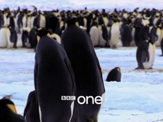 cineraria:  Penguins: Spy in the Huddle Trailer - BBC One - YouTube