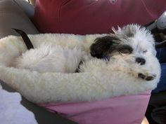 Amazon.com : Snoozer Console Pet Car Seat Cream Fur, Small, Black : Pet Beds : Pet Supplies