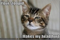 your-stupid.jpg (JPEG Image, 644×430 pixels)