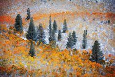 Snow Canvas by DM Weber