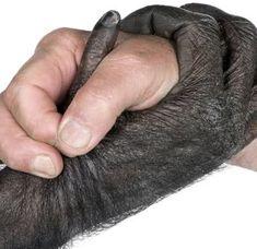 Evolução Humana - Paleoantropologia