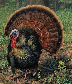 s Turkey Pics, Turkey Art, Wild Turkey, Rooster Painting, Feather Painting, Hunting Art, Turkey Hunting, Tattoo Design Drawings, Bird Drawings
