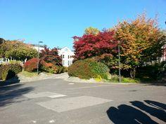 JKU im Herbst Johannes Kepler, Student Exchange, Austria, Sidewalk, University, Linz, Autumn, Walkway, Community College