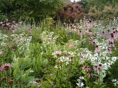 Organic Gardening Supplies Needed For Newbies Piet Oudolf Border - Rhs-Tuin Wisley Garden Inspiration, Dutch Gardens, Plants, Beautiful Gardens, Wildflower Garden, Meadow Garden, Prairie Garden, Natural Garden, Cottage Garden