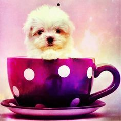 What would you choose - a cuppa, or a puppy? We'd choose both!