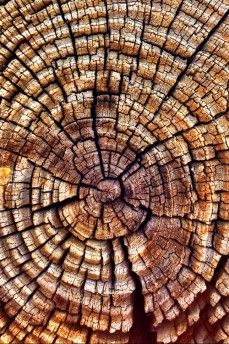 tree rings and the natural splits in the wood plus the colour has my creative juices working