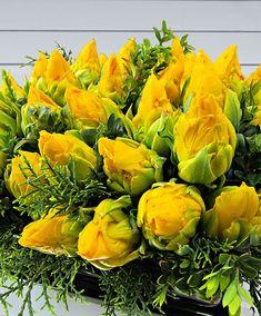Tulipes doubles 'Tropical Wave' - Bulbe à fleurs