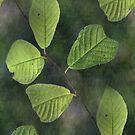 Be-leaf in you von Jasardpu