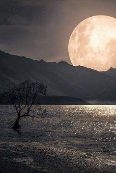 island of silence: Bild