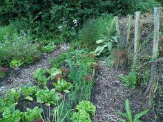 152 beste afbeeldingen van eetbare tuin groentetuin for Tuinontwerp eetbare tuin