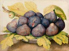 Giovanna Garzoni (1600-1670): Plate of Figs 1662