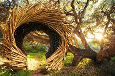 Human Nests by Jayson Fann
