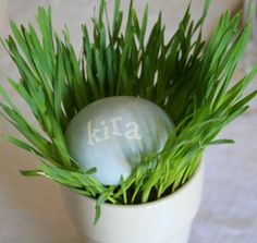 """""""Name cards"""". individual wheat grass pots and dyed Easter egg with name...Cute!"""
