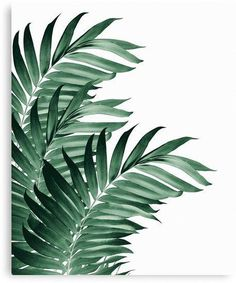 Palm Leaves Tropical Green Vibes Modern Credenza/cupboard by Anita's & Bella's Artwork - Gold - Birch Tropical House Design, Tropical Home Decor, Tropical Interior, Tropical Colors, Tropical Vibes, Tropical Houses, Tropical Leaves, Tropical Plants, Palm Plants