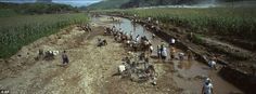 Rebuilding life: North Koreans try to rebuild the banks of a washed out riverbed near their corn fields which were damaged by July flooding, in Songchon County.