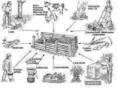 Angelköder-Angelwürmer-Kompostwürmer-Futterwürmer-Wurmhumus - Kompostwürmer