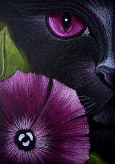 Cyra R. Cancel - BLACK CAT BEHIND THE PETUNIA FLOWER - Pencil