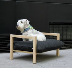 Modern Elevated Dog Bed from HAT Design