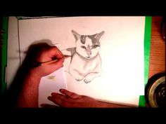 SPEED DRAWING of a lazy Cat
