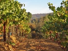 Join #Loretto and #CaleraVineyards for an amazing #SantaFe Wine Dinner on September 26 in #LuminariaRestaurant. Celebrate The Annual SantaFe #Wine and #Chile #Fiesta with Chef Brett Sparman and special guest Josh Jensen of Calera Vineyards.   http://www.innatloretto.com/new-mexico-dining/santa-fe-dining.php