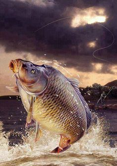 Pecanje fishing added a new photo. Carp Fishing Tips, Bass Fishing, Whitetail Deer Pictures, Carp Tattoo, Fish Background, Common Carp, Coy Fish, Fish Artwork, Jellyfish Art