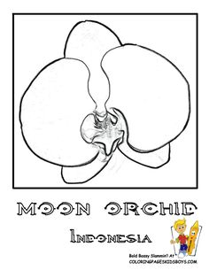 Indonesia: Moon Orchid Coloring Page For Kids Boys Flower Coloring Pages, Coloring Pages For Kids, Tropical Flowers, Colorful Flowers, Vbs Crafts, Crafts For Kids, Flower Symbol, Rare Flowers, Flowers