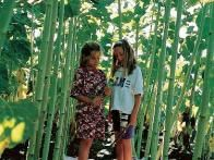 If you have children, grow an almost-instant playhouse for them to enjoy. The stalks of 'Sunforest Mix' sunflower can reach 10-15 feet high and spread up to 40 inches across. Plant the seeds in blocks, leaving 3 to 4 feet between each block, to create a living maze. The blooms typically measure a foot or more across.