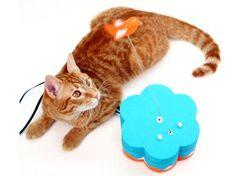 kitty twitty - kitty plays, kitty twitty tweets it!