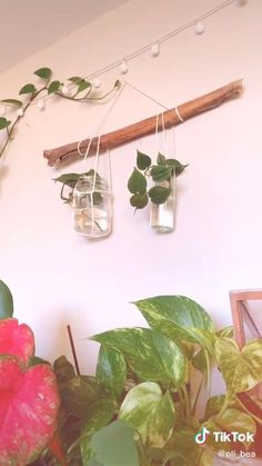 House Plants Decor, Plant Decor, Plant Wall Diy, Air Plant Display, Hang Plants From Ceiling, Things To Hang From Ceiling, Diy Hanging Planter, Wall Hanging Plants Indoor, Hanging Gardens