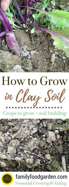 Gardening with Clay Soil + Best Vegetables for Clay Soil