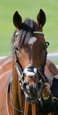 Frankel - Juddmonte at York 2012 | Flickr - Photo Sharing!