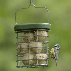 I helped give nature a home and bought Big Garden Birdwatch suet kit from the RSPB.  http://shopping.rspb.org.uk/big-garden-birdwatch-suet-kit.html